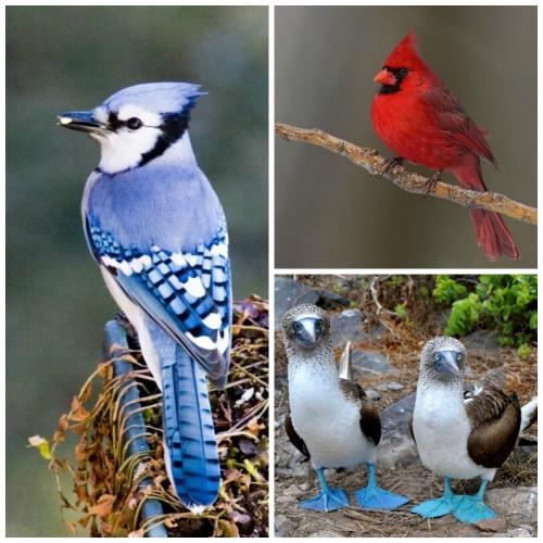 Bird Fav